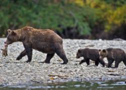 Canadian Wildlife