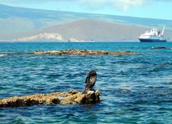 Specialist Cruises
